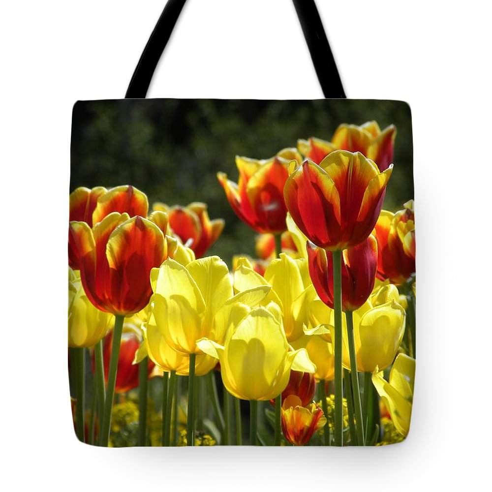 Tulips Tote Bag featuring the photograph Tulips Of Germany by Jewels Hamrick