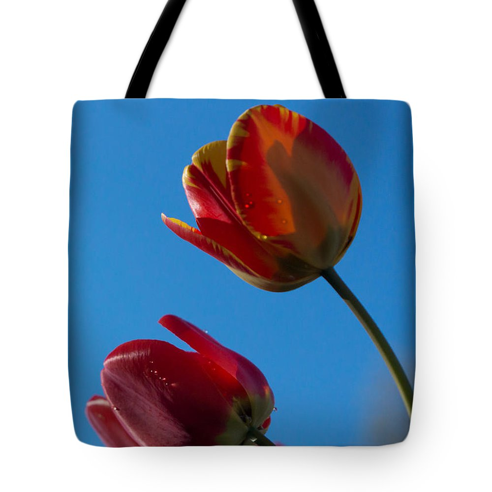 Tulip Tote Bag featuring the photograph Tulips On Blue by Photographic Arts And Design Studio