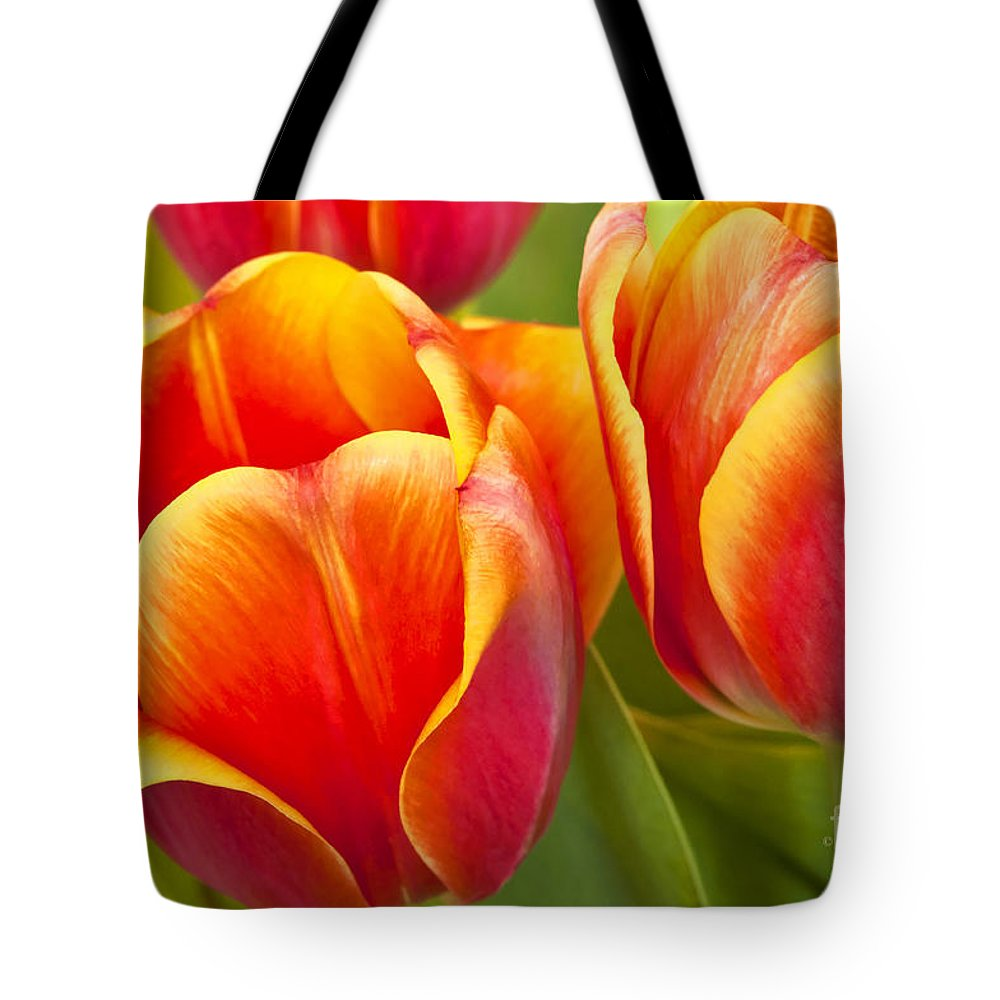 Tulips Tote Bag featuring the photograph Tulips Red And Yellow by Regina Geoghan