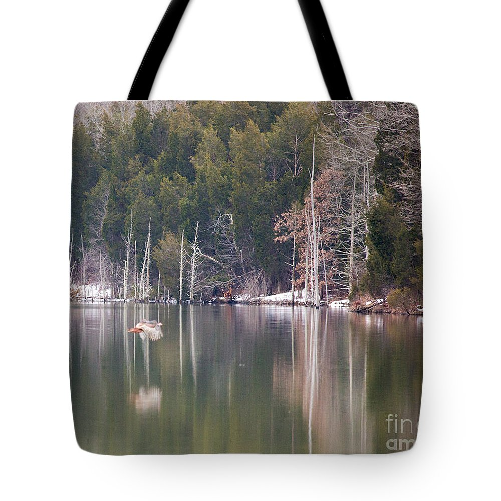 Wild Tote Bag featuring the photograph Turkey Flying Across Lake by Flying Turkey