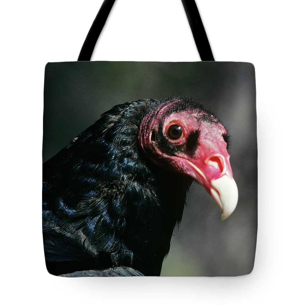 Photography Tote Bag featuring the photograph Turkey Vulture Cathartes Aura South by Animal Images