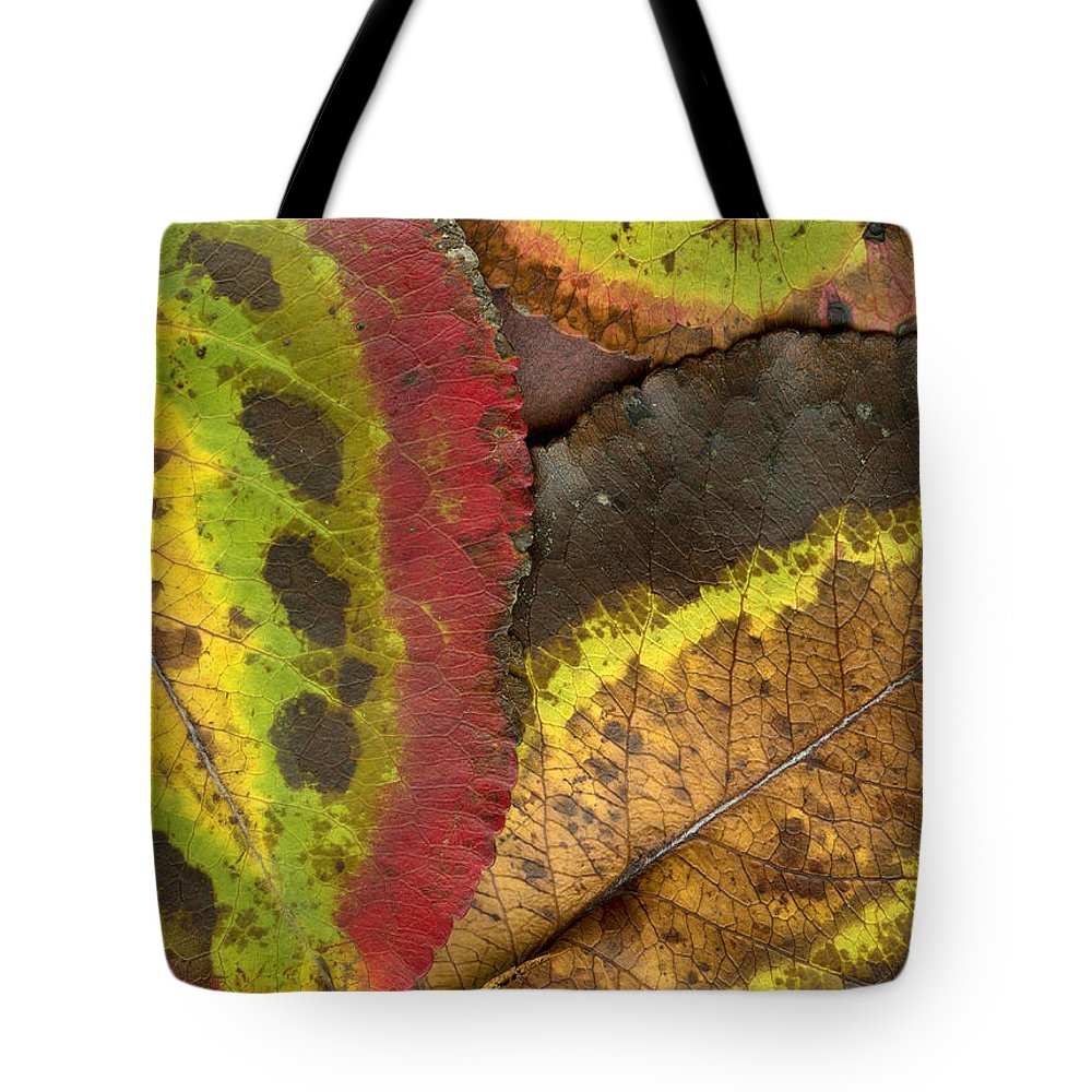 Leaf Tote Bag featuring the photograph Turning Leaves 2 by Stephen Anderson