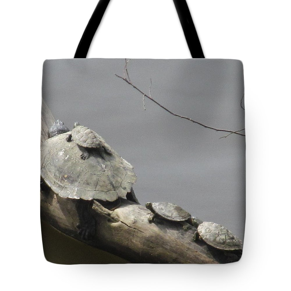 Turtle Tote Bag featuring the photograph Turtle Clan by Tina M Wenger