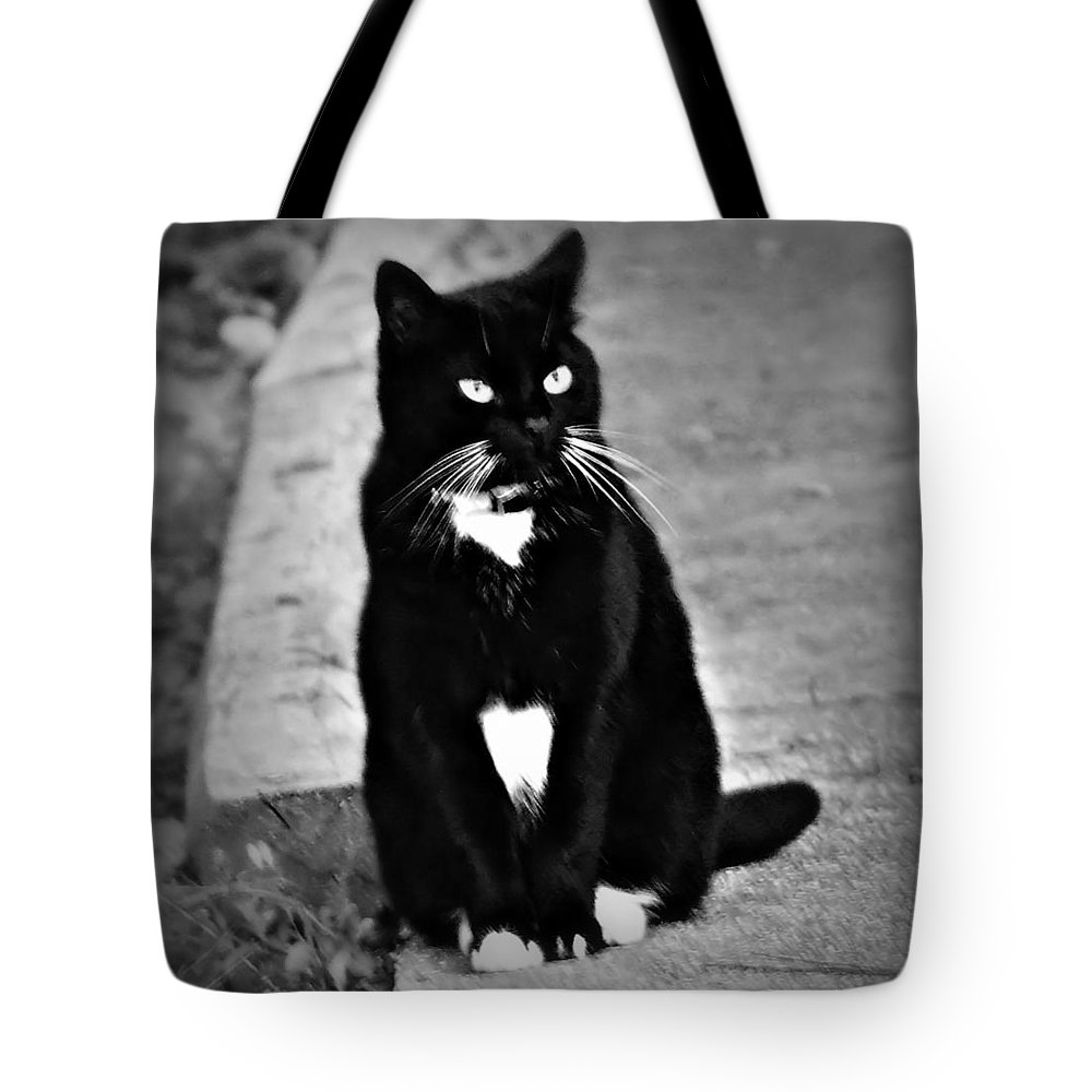 Tuxedo Tote Bag featuring the photograph Tuxedo Cat by Tara Potts