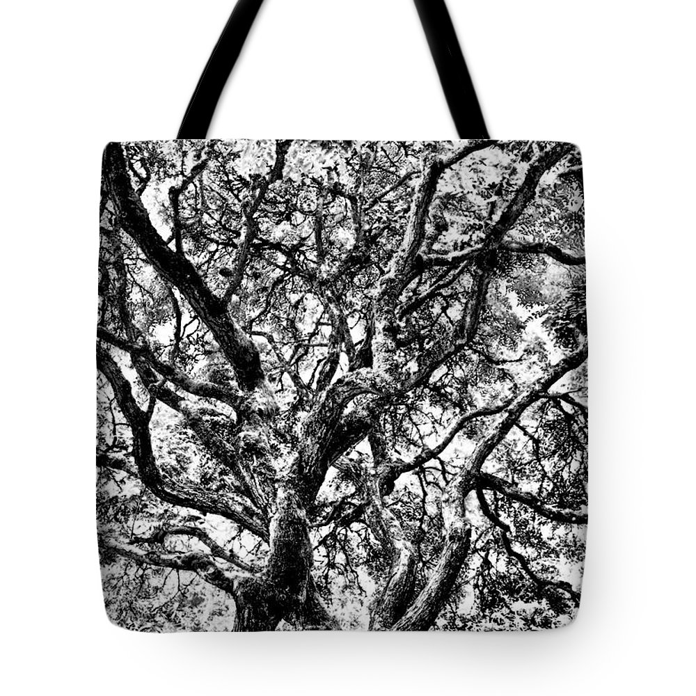 Trees Tote Bag featuring the photograph Twisted Trunks by Venetta Archer