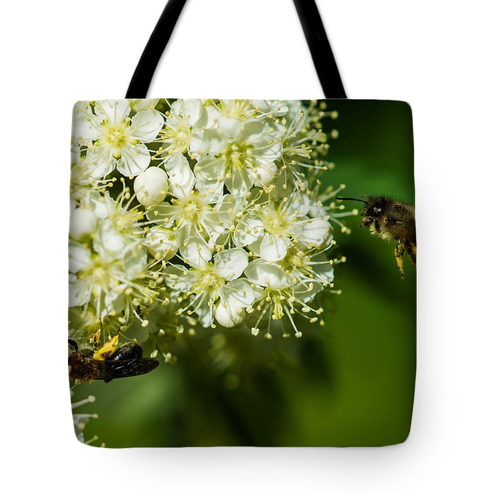 Animal Tote Bag featuring the photograph Two Bees On A Rowan Truss - Featured 3 by Alexander Senin
