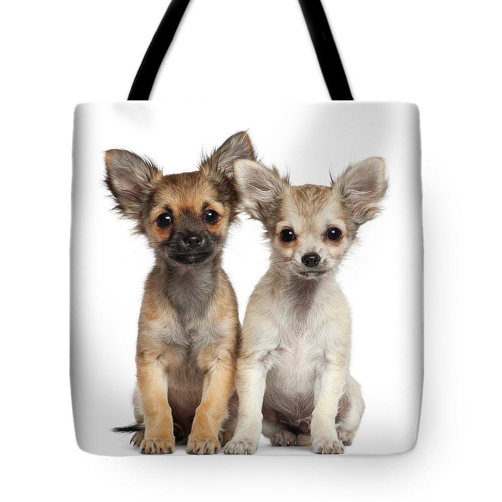 Pets Tote Bag featuring the photograph Two Chihuahua Puppies Sitting 3 Months by Life On White