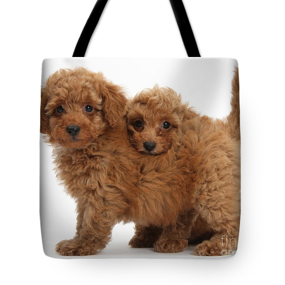 Two Cute Red Toy Poodle Puppies Tote Bag