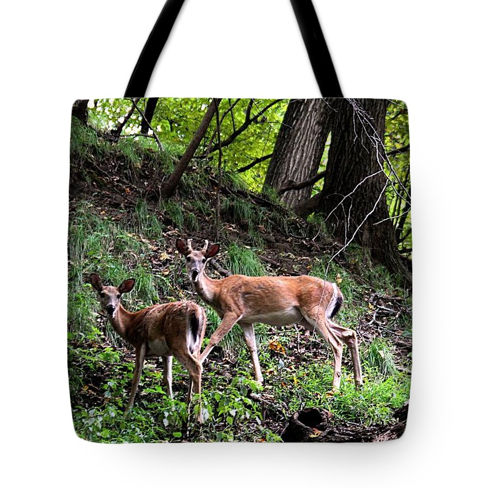 Woods Tote Bag featuring the photograph Two Deer by Elizabeth Winter