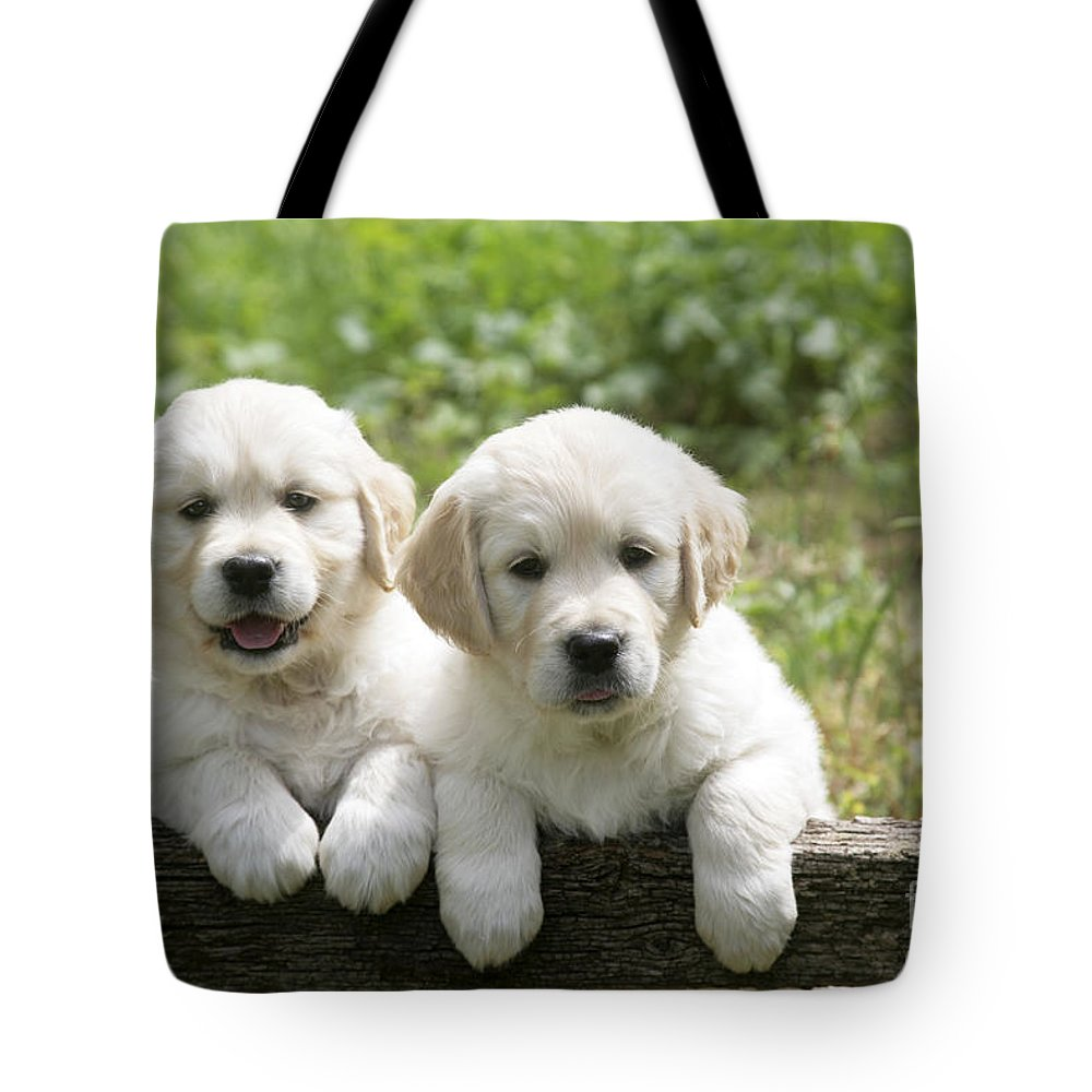 Two Tote Bag featuring the photograph Two Golden Retriever Puppies by John Daniels