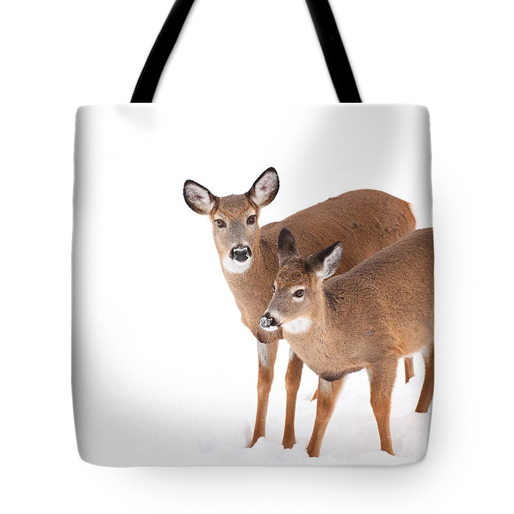 Buck Tote Bag featuring the photograph Two In The Snow by Karol Livote