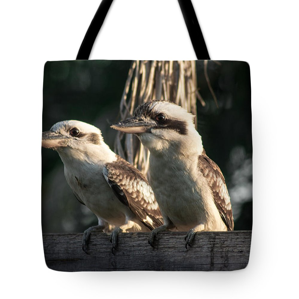 Kookaburra Tote Bag featuring the photograph two Kookaburra by Michael Podesta