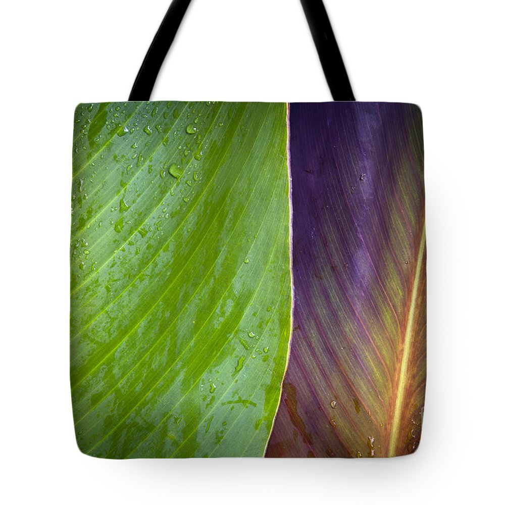 Background Tote Bag featuring the photograph Two Leaves by Tim Hester