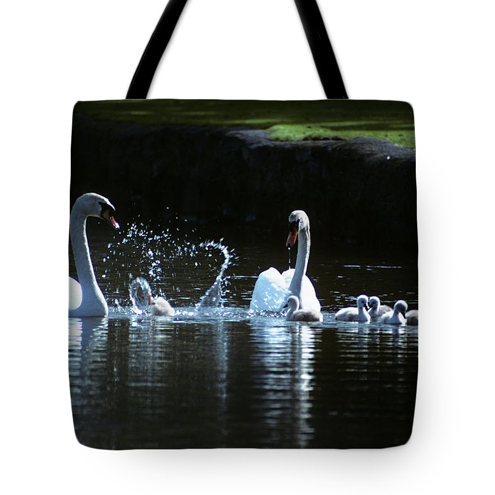 Photography Tote Bag featuring the photograph Two Mute Swans With Young Cygnus Olor by Animal Images