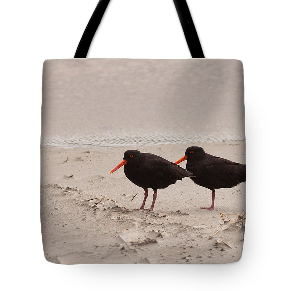 Animal Tote Bag featuring the photograph Two Oystercatchers Haematopus Unicolor On Beach by Stephan Pietzko