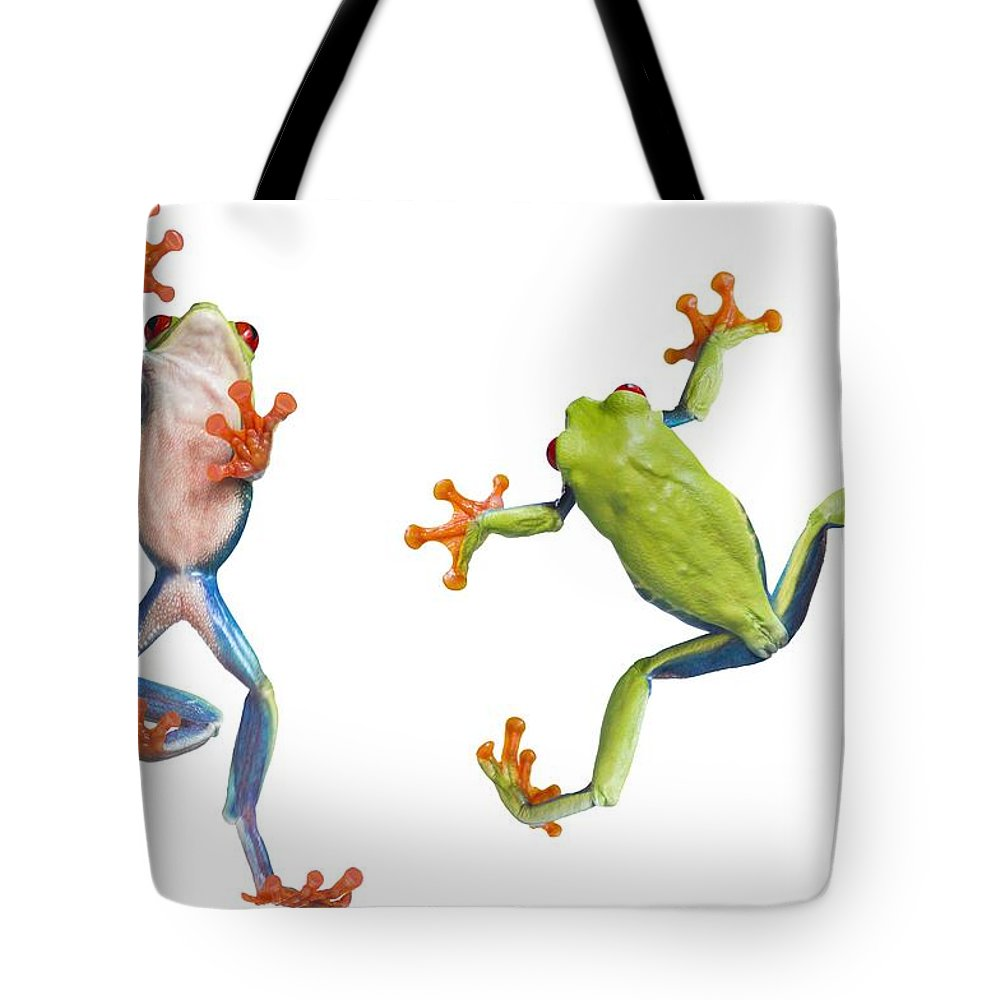 Amphibian Tote Bag featuring the photograph Two Red Eyed Tree Frogs by Corey Hochachka