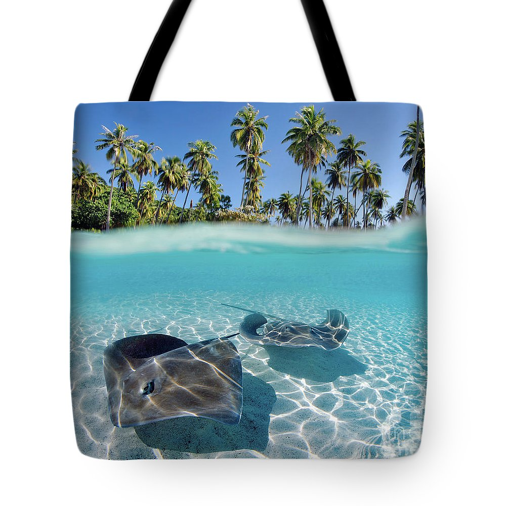 Above Tote Bag featuring the photograph Two Stingrays 1 by M Swiet Productions