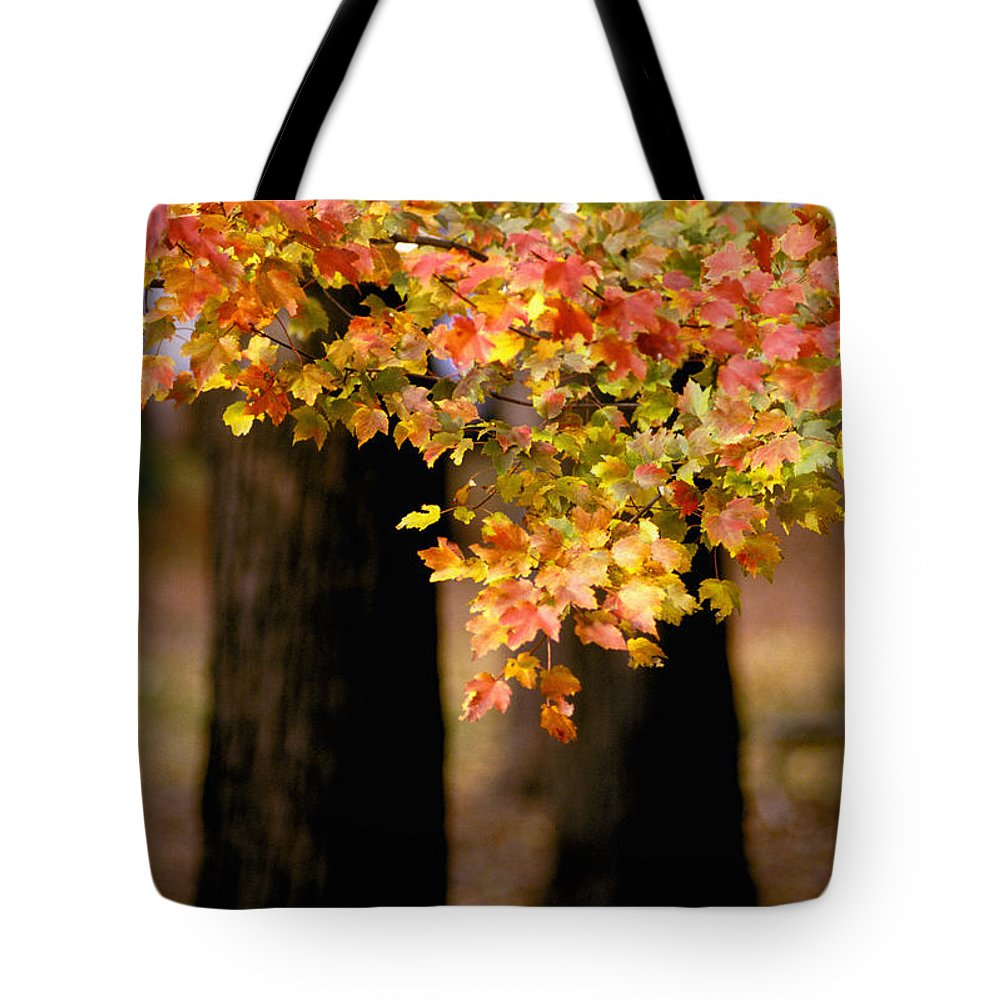 Autumn Tote Bag featuring the photograph Two Trees by Matthew Pace