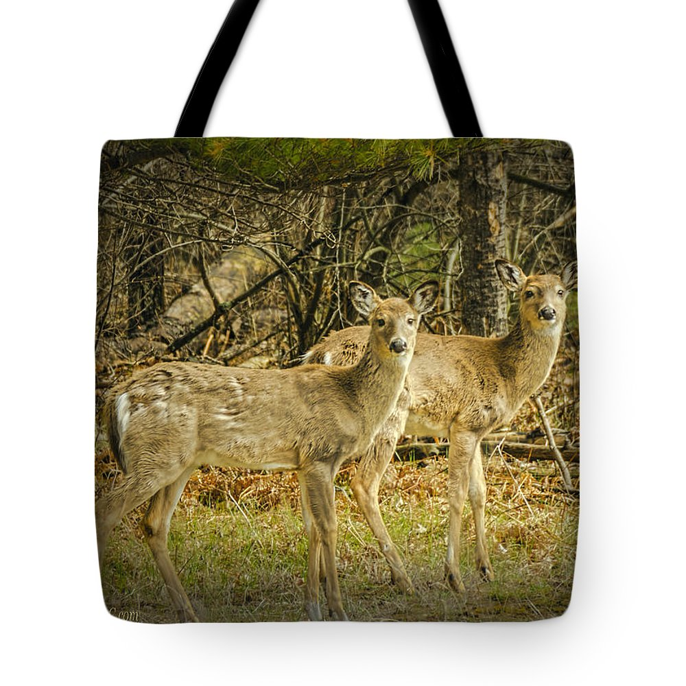 Two Tote Bag featuring the photograph Two White Tailed Deer by LeeAnn McLaneGoetz McLaneGoetzStudioLLCcom