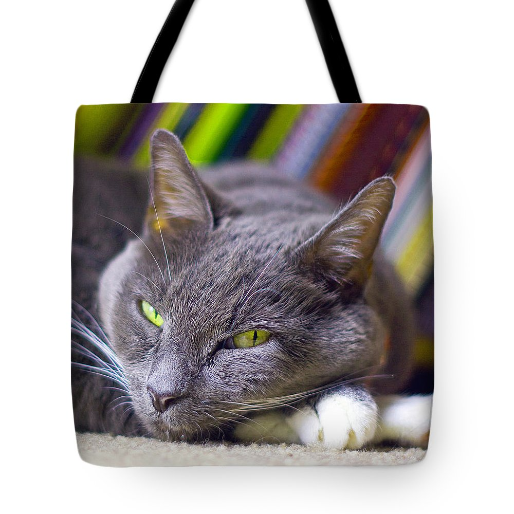 Grey House Cat Tote Bag featuring the photograph Tyla by Joseph C Hinson