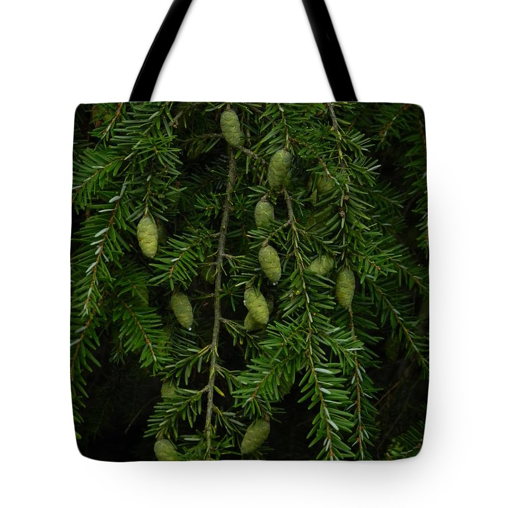 Tyler Tote Bag featuring the photograph Tyler Baby Pinecones 2 by Heather Jane