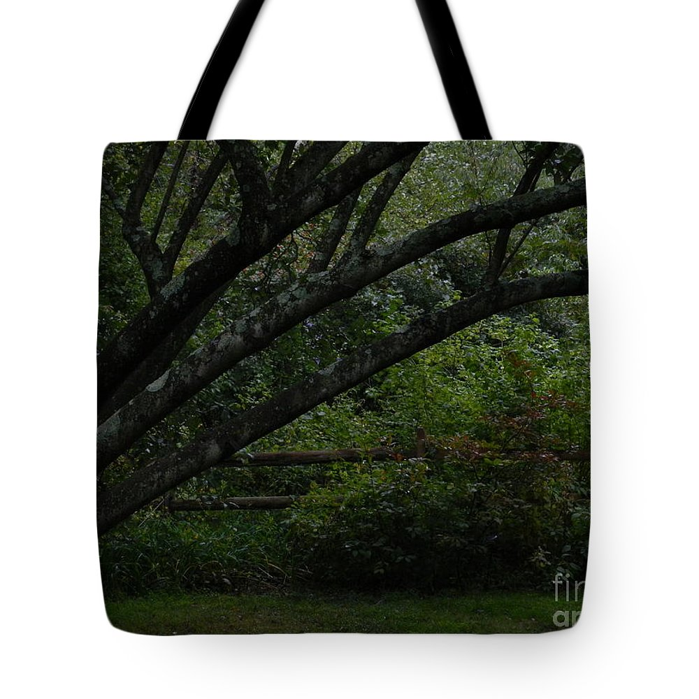Tree Tyler Arboretum Pennsylvania Tote Bag featuring the photograph Tyler Tree 1 by Heather Jane