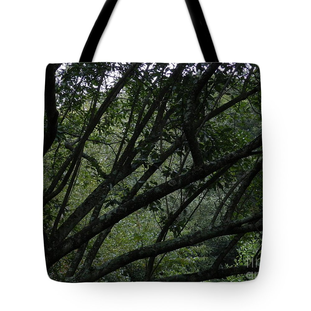 Tree Tyler Arboretum Pennsylvania Tote Bag featuring the photograph Tyler Tree 2 by Heather Jane