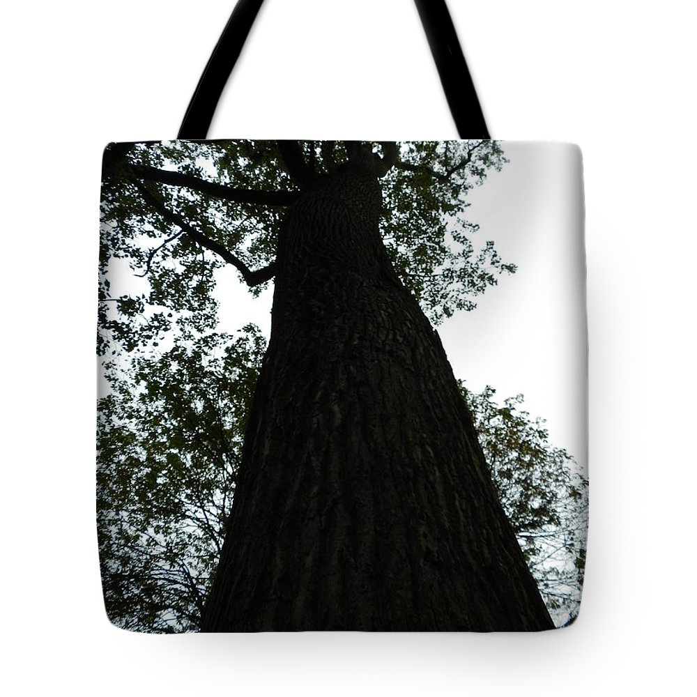 Tyler Tote Bag featuring the photograph Tyler Tree 6 by Heather Jane