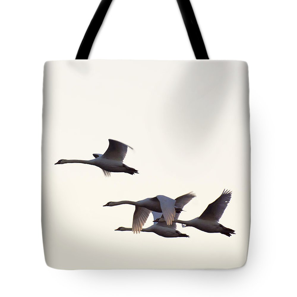 Mute Tote Bag featuring the photograph Under Wing by Joe Geraci