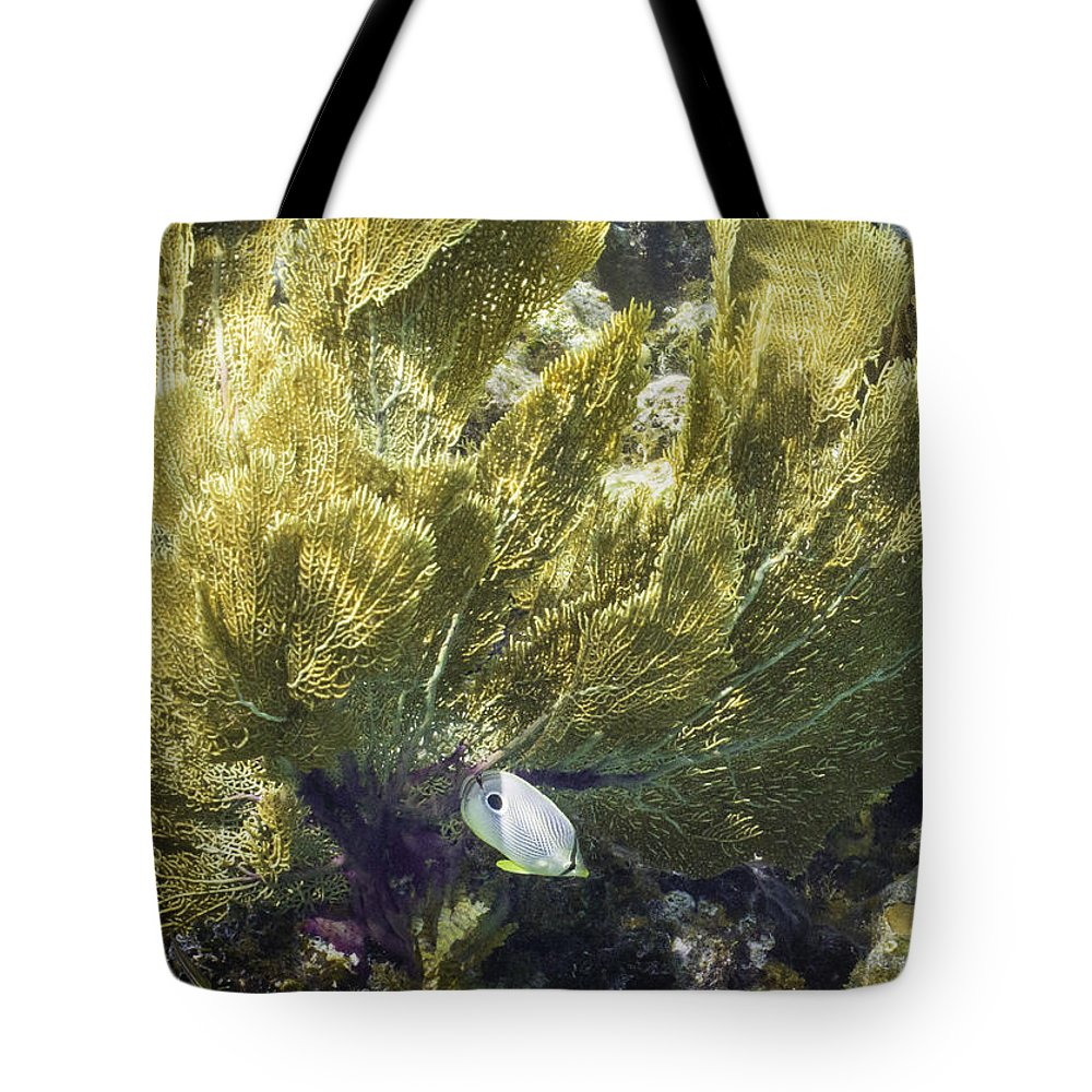 Ocean Tote Bag featuring the photograph Undercover by Lynne Browne