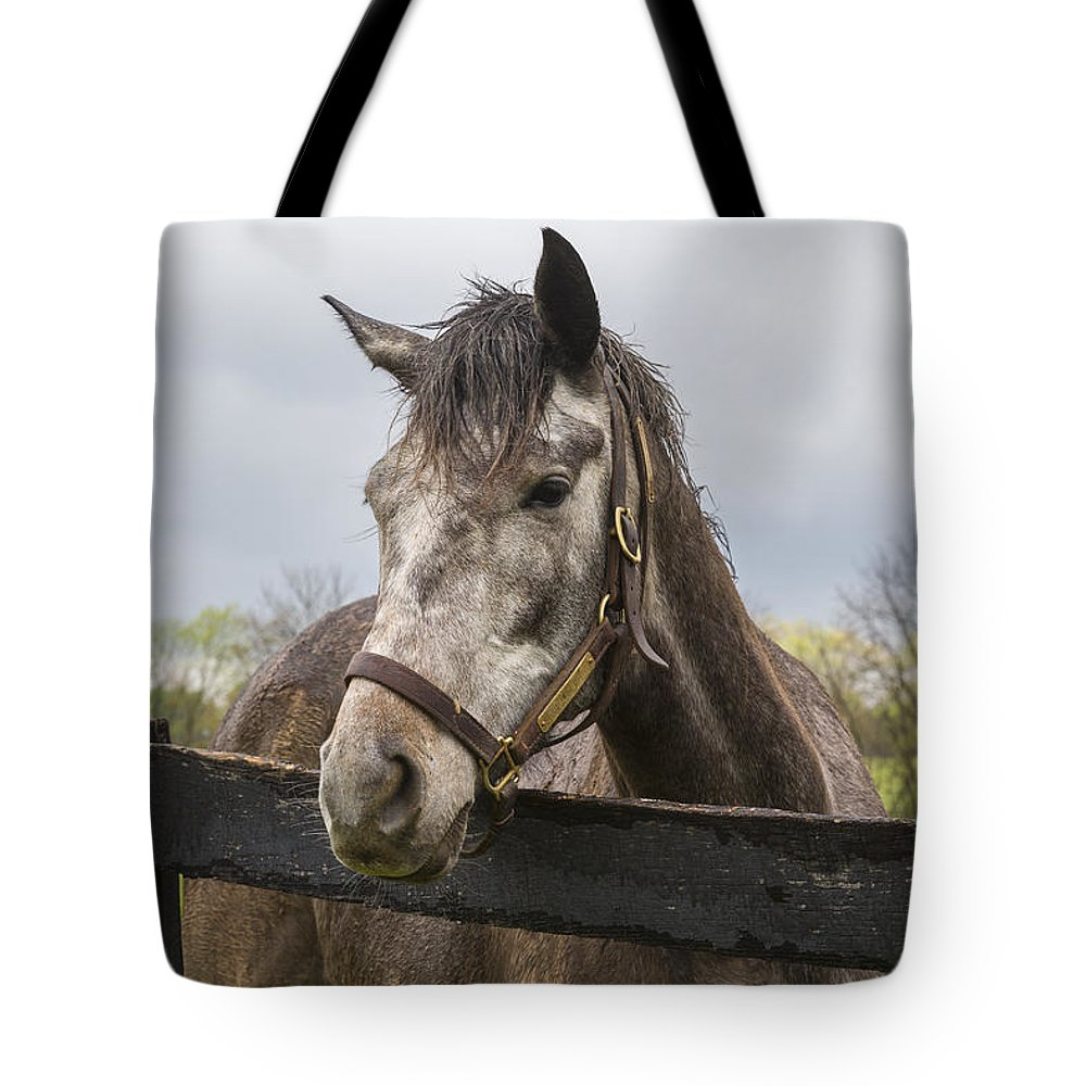 Animal Tote Bag featuring the photograph Unrivaled Honor by Jack R Perry