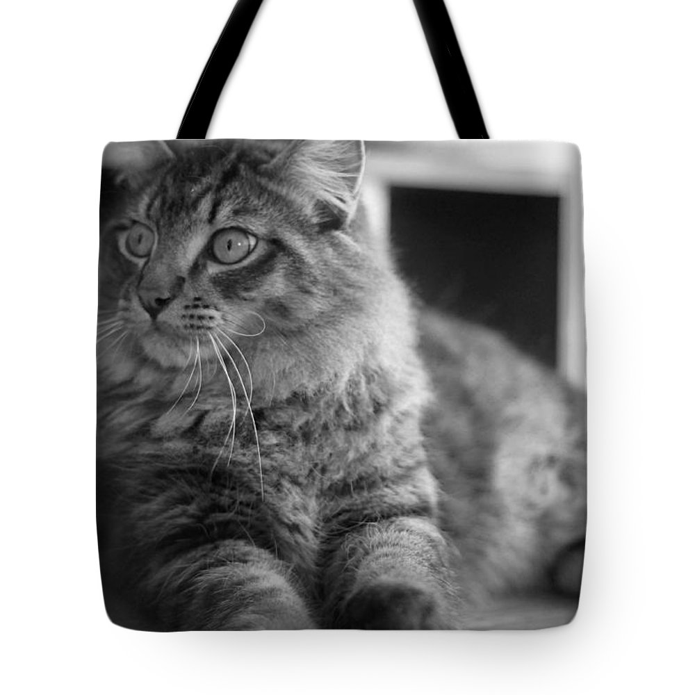 Cat Tote Bag featuring the photograph Untitled by K Hines