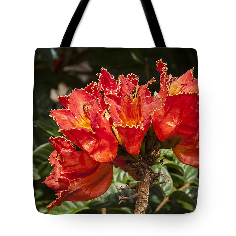East Maui Hawaii African Tulip Tree Tulips Trees Flower Flowers Blooms Bloom Blossom Blossoms Nature Tote Bag featuring the photograph Unusual Tulips by Bob Phillips