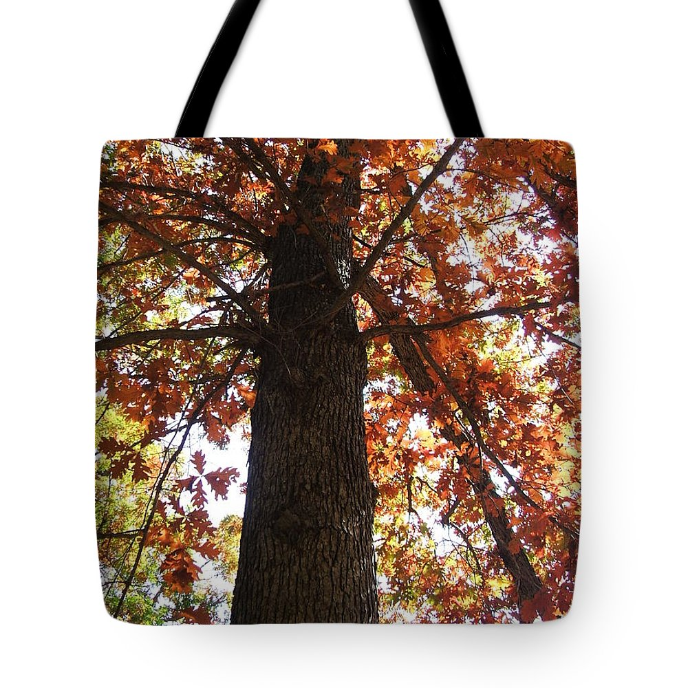 Tree Tote Bag featuring the photograph Up Fall by Minding My Visions by Adri and Ray