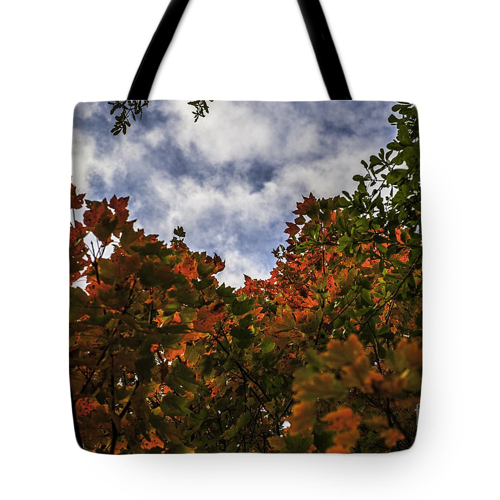 Maple Leaf Tote Bag featuring the photograph Up To The Sky by Dale Powell