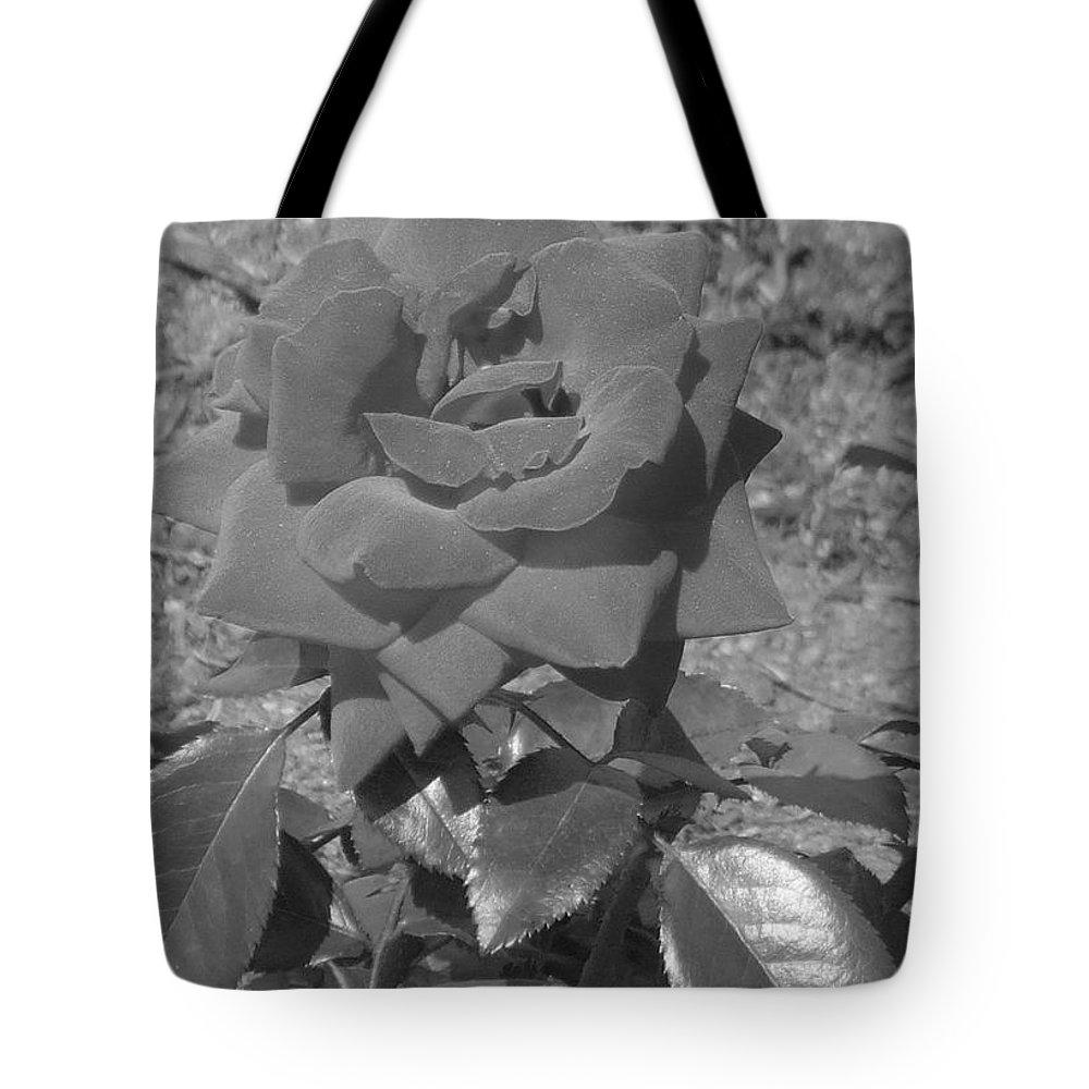 Rose Tote Bag featuring the photograph Velvet Rose by Pharris Art