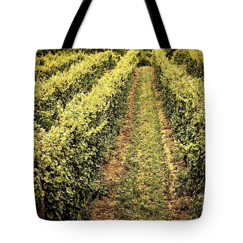 Vineyard Tote Bag featuring the photograph Vines Growing In Vineyard by Elena Elisseeva