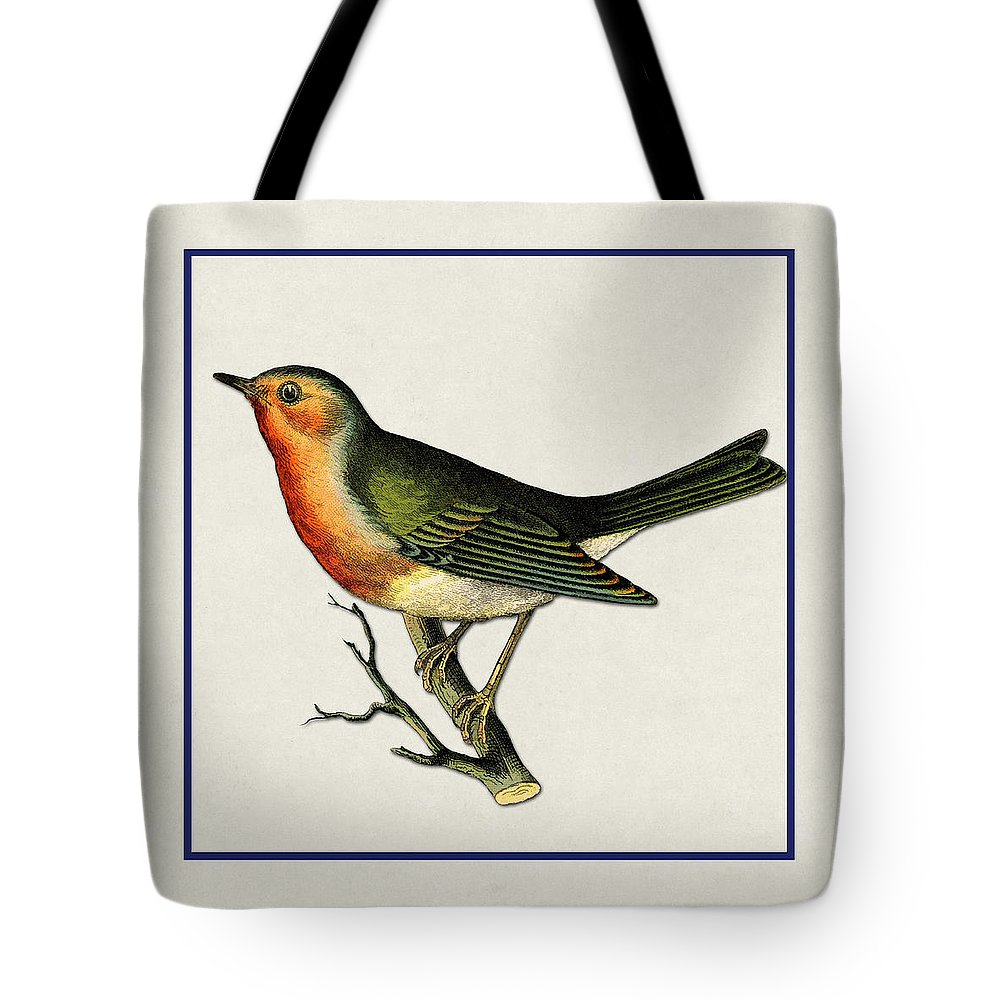 Antique Vintage Traditional Bird Birds Realistic Formal Animal Wild Flying Avian Feathers  Tote Bag featuring the painting Vintage Robin Square by Elaine Plesser