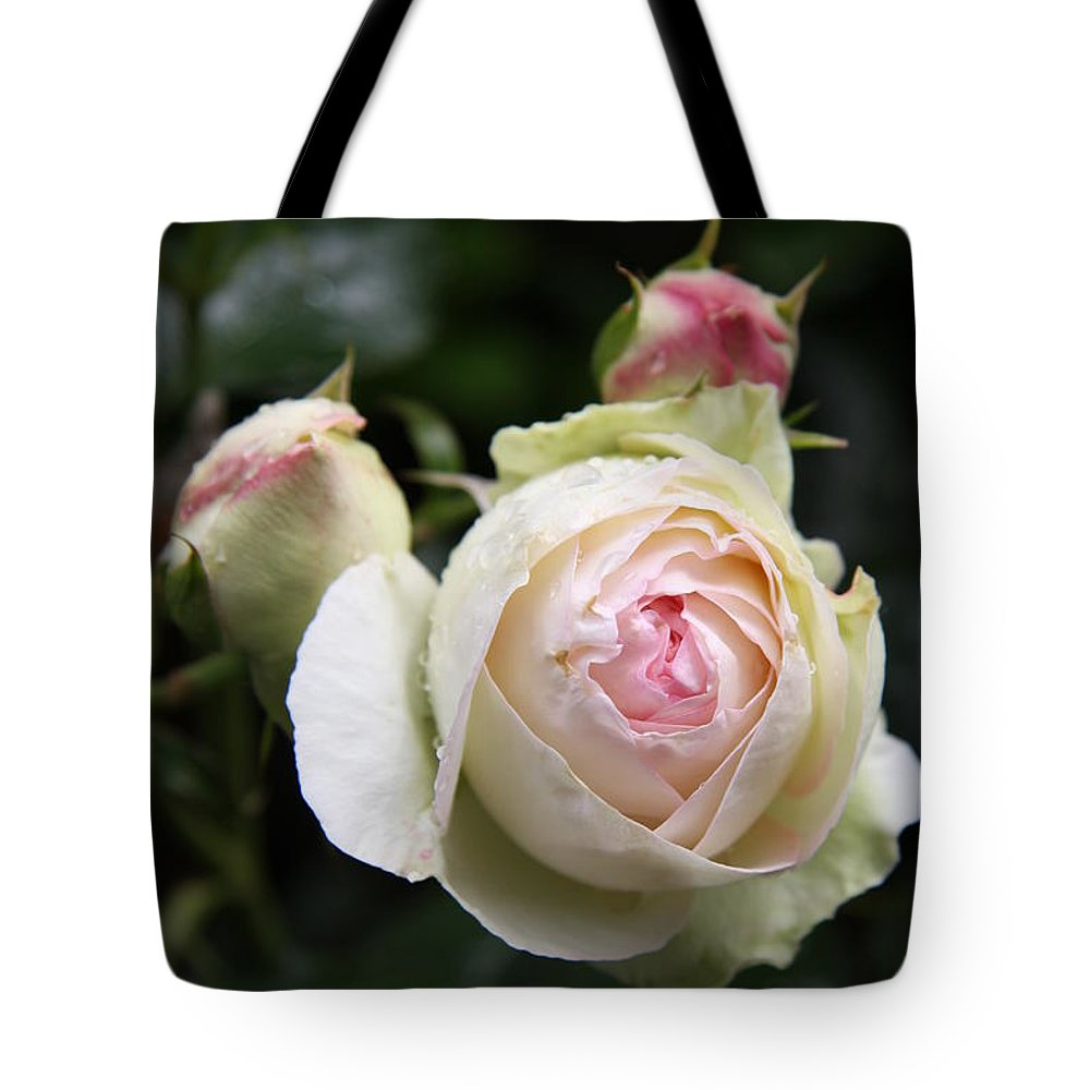 Rose Tote Bag featuring the photograph Vintage Rose by Christiane Schulze Art And Photography