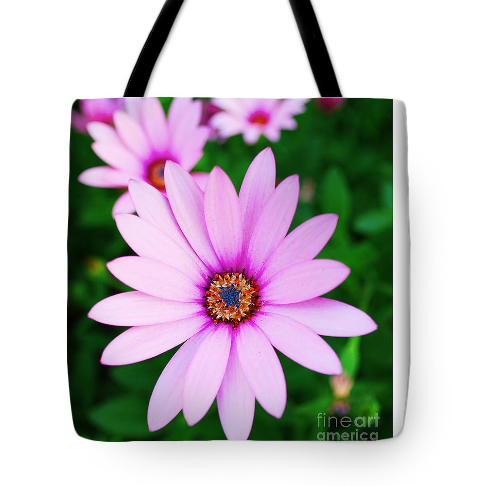 Daisy Tote Bag featuring the photograph Violet Daisy by Luis Alvarenga