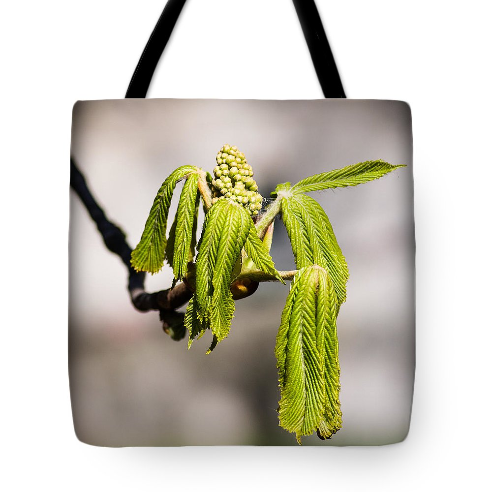 Beautiful Tote Bag featuring the photograph Vitalization - Featured 2 by Alexander Senin
