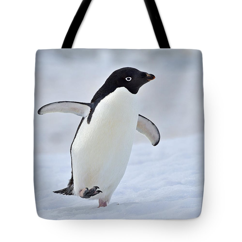 Adelie Penguin Tote Bag featuring the photograph Waddling by Tony Beck