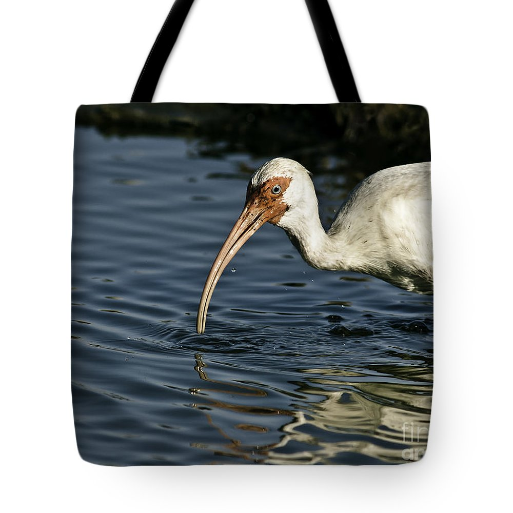 Animal Tote Bag featuring the photograph Wading Ibis by Robert Frederick