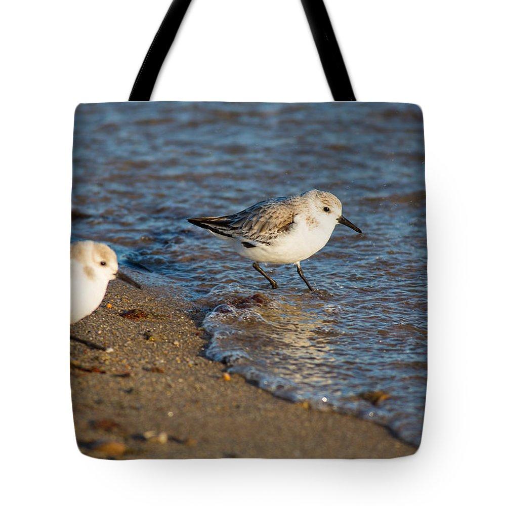 Sanderlings Tote Bag featuring the photograph Wading Sanderlings by Allan Morrison