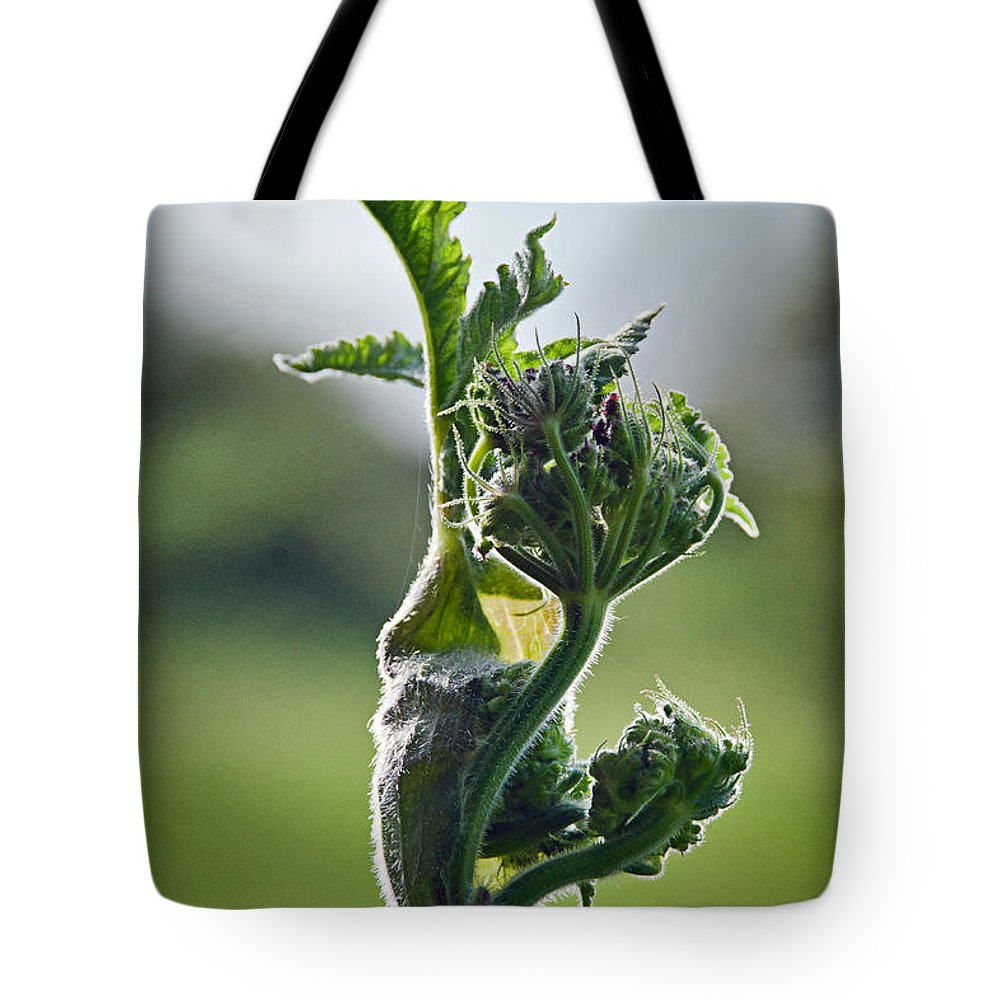Coastal Path Tote Bag featuring the photograph Waiting For Release by Susie Peek