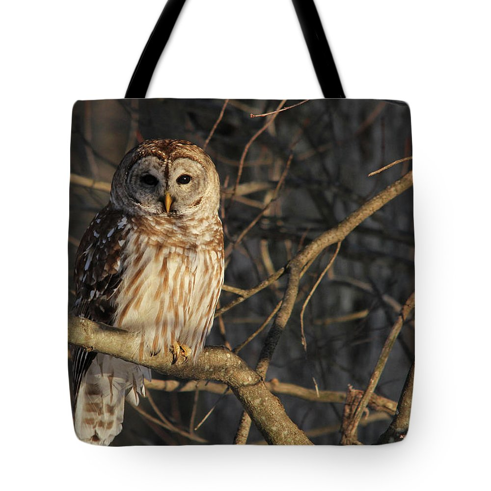 Owl Tote Bag featuring the photograph Waiting For Supper by Lori Deiter