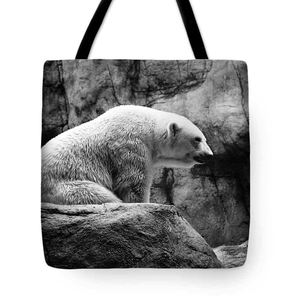 Polar Bear Tote Bag featuring the photograph Waiting For Winter by Bill Pevlor