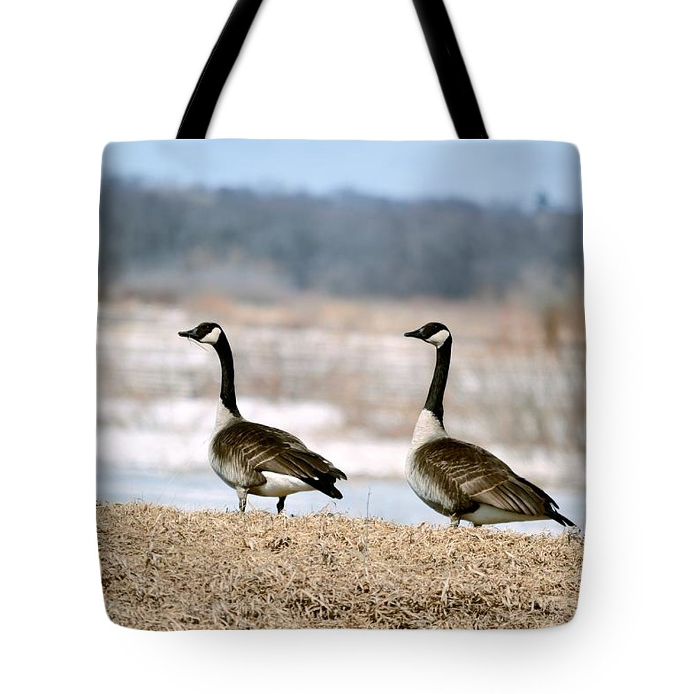 Geese Tote Bag featuring the photograph Waiting On Spring by Bonfire Photography