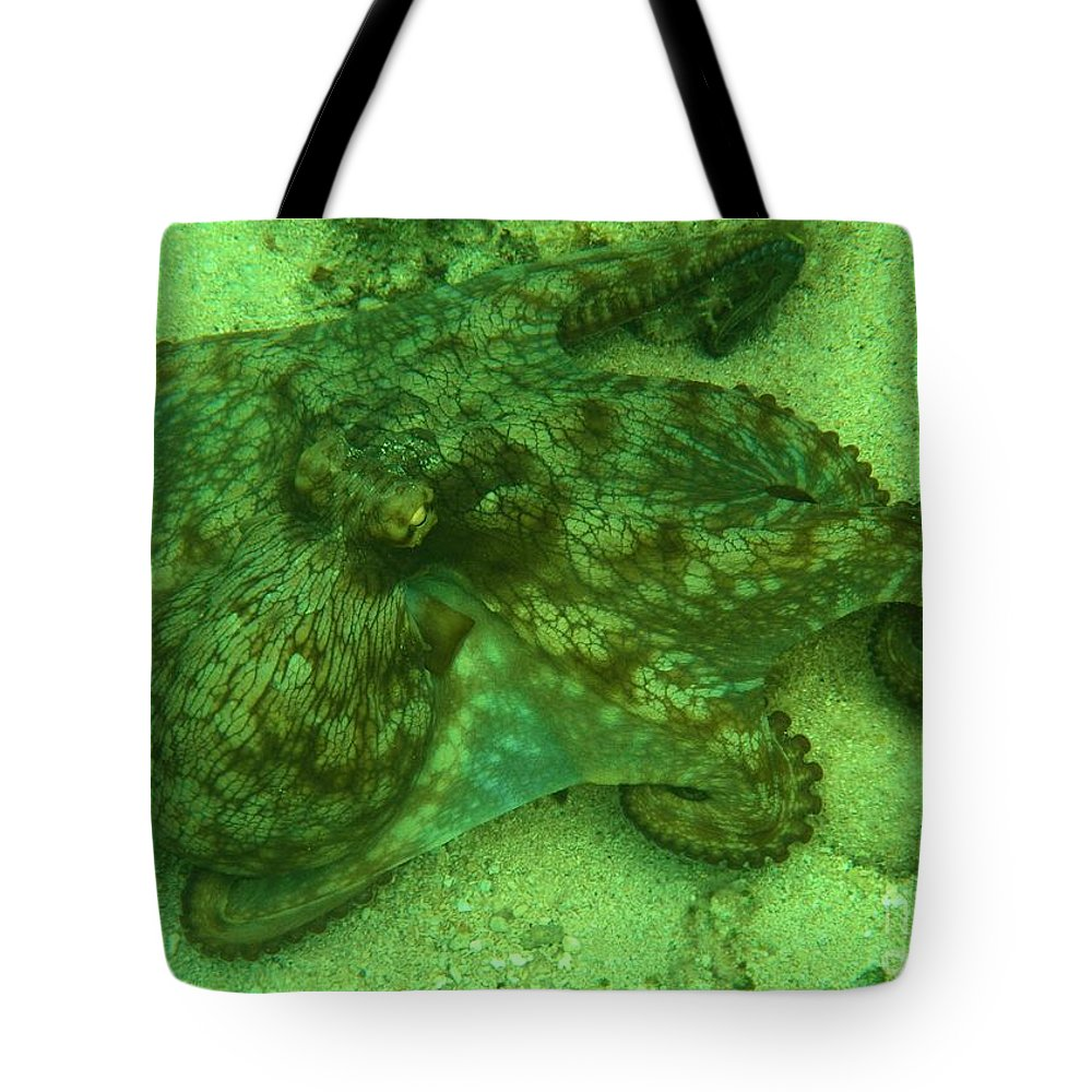 Common Octopus Tote Bag featuring the photograph Walking Octopus by Adam Jewell