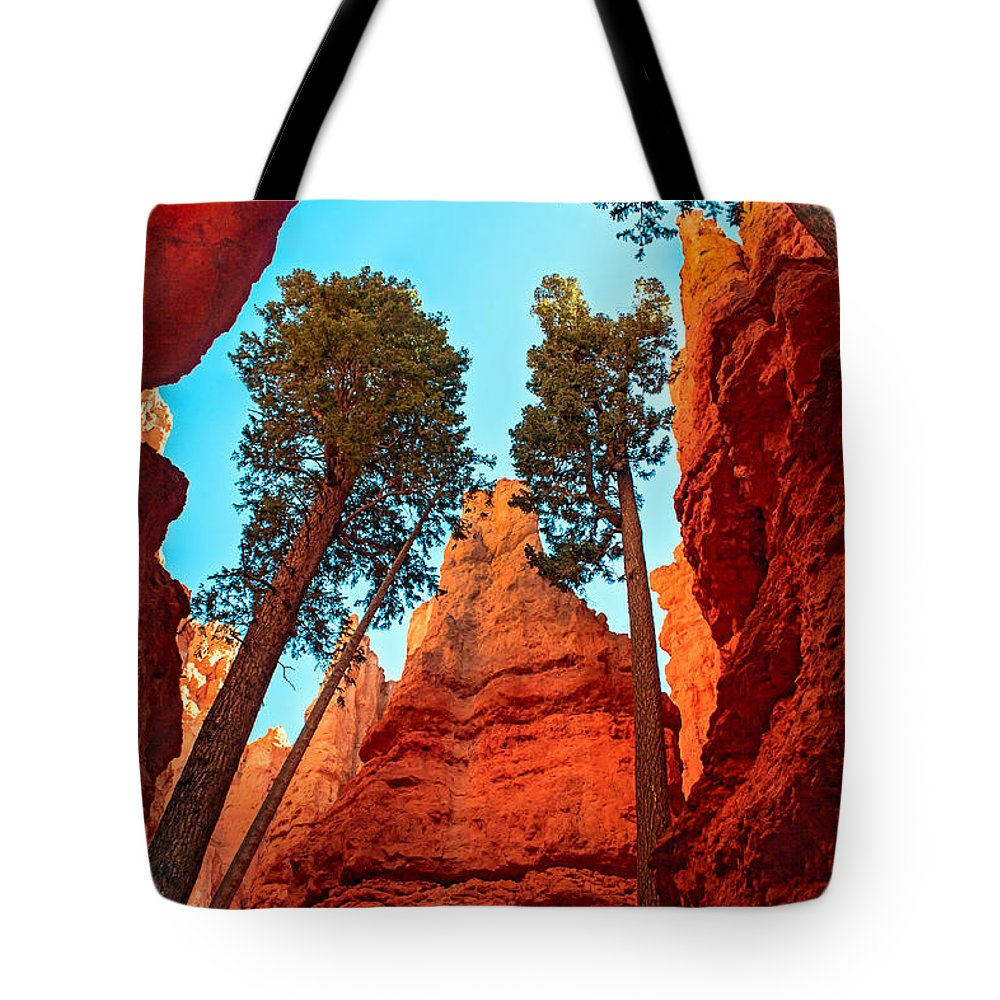 Trees Tote Bag featuring the photograph Wall Street by Robert Bales